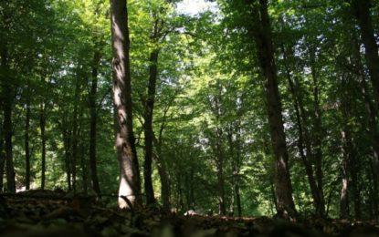 جنگلهای منحصر به فرد هیرکانی ایران در میراث جهانی یونسکو ثبت شد