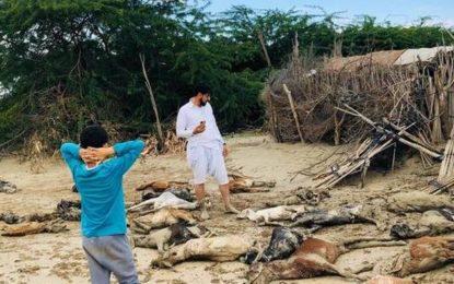 سیستان و بلوچستان را آب برد، مسئولین را خواب!