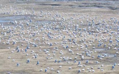 پرندگان زایندهرود، نمادی از نابودی طبیعت ایران به دست مافیای آب