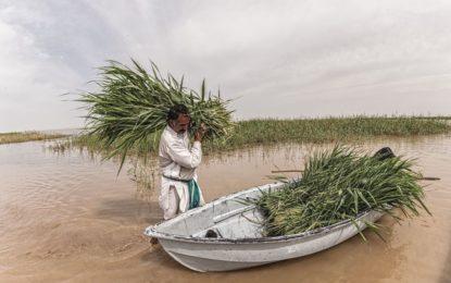 حمایت 10 میلیون یورویی اتحادیه اروپا برای احیای تالاب های هامون